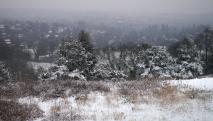 Snowy Reigate 23 March