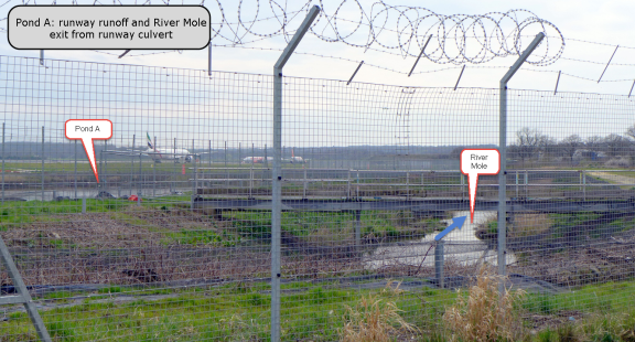 Pond A: where the Mole exits the runway culvert