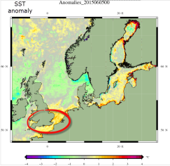 locally warm SSTs